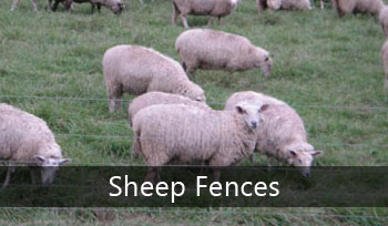 Sheep Fences